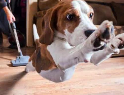 Podium | Cuidado y limpieza de tu perro